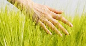 Fotografía de una mano acariciando hierva del campo. La imagen hace referencia al seguro de responsabilidad civil en materia medioambiental