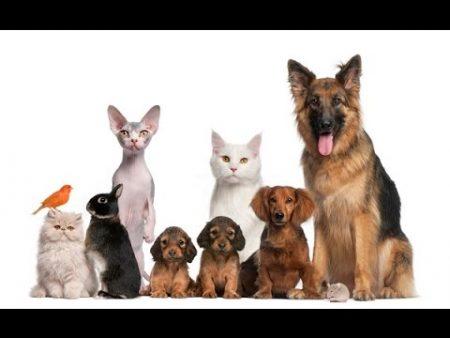 Regalar mascotas es regalar responsabilidad