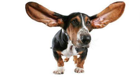 Cortar el rabo o las orejas a las mascotas o regalarlas como premio ya está prohibido en España