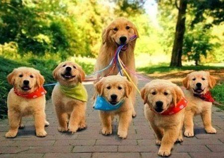 Responsabilidad Civil derivada de actos cometidos por mascotas y seguro de responsabilidad civil